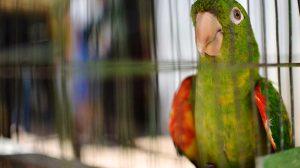 Operação conjunta resgata 70 animais silvestres em Santa Maria