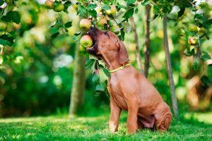 10 frutas prediletas dos cães