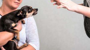 Como lidar com um cãozinho ciumento