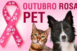 Outubro Rosa Pet alerta para câncer de mama em cadelas e gatas