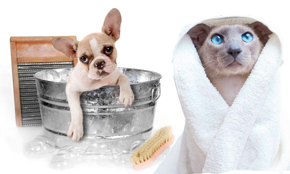 Economizando água: Dicas para dar banho a seco no seu pet