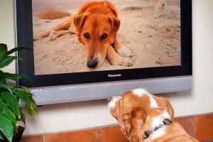 DogTV, canal de televisão próprio para cachorro chega ao Brasil