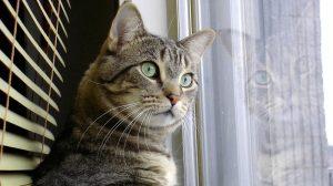Vai deixar o gato em casa sozinho? Veja algumas dicas e cuidados importantes