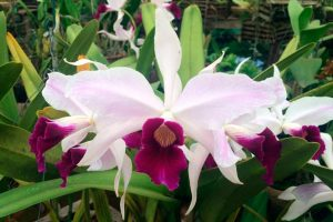 Lago Sul recebe a primeira edição da Mostra de Orquídeas no Deck Brasil