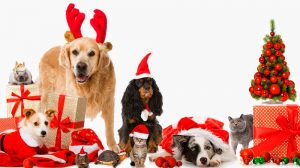 O natal está chegando... cuidado com as guloseimas!