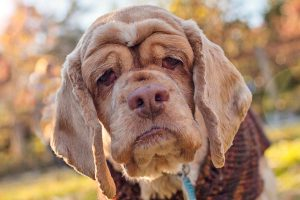 Mudanças indicam que pets estão na fase idosa; saiba quais cuidados são importantes