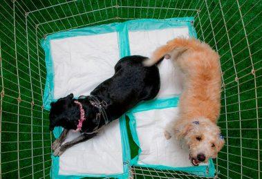 Quer adotar um pet? Feira de adoção do Alameda Shopping é a oportunidade para ter o melhor amigo