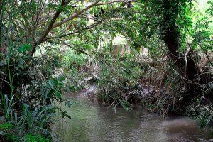 Doações ao Fórum Mundial da Água serão usadas para recuperar mananciais no DF